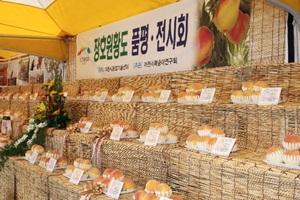 햇사레장호원복숭아축제,국내여행,음식정보