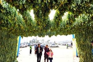 DMZ펀치볼시래기축제,강원도 양구군,지역축제,축제정보