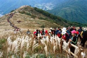 민둥산 억새꽃축제,국내여행,음식정보