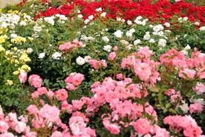 광양 꽃축제,전라남도 광양시,지역축제,축제정보