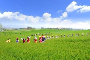 고창청보리밭축제,전라북도 고창군,지역축제,축제정보