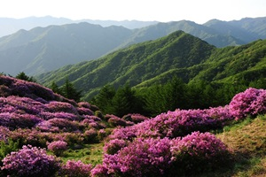 남원 바래봉 철쭉제,전라북도 남원시,지역축제,축제정보