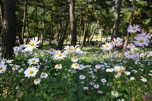 정읍구절초축제,전라북도 정읍시,지역축제,축제정보