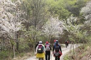 금산 비단고을 산꽃축제,국내여행,음식정보