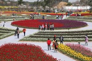 태안백합꽃축제,국내여행,음식정보