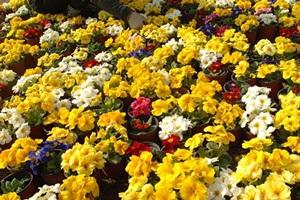 음성군새봄맞이꽃큰잔치,국내여행,음식정보