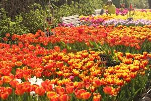 한림공원 꽃축제,제주특별자치도 제주시,지역축제,축제정보