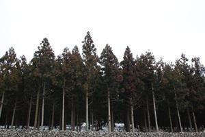 사려니숲 에코힐링 체험행사,제주특별자치도 제주시,지역축제,축제정보