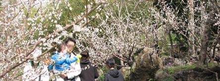 서귀포에 봄이 왔네