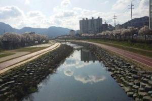 계절투어 하얀순백코스-벚꽃신록투어코스(4월 2주~3주),전라북도 정읍시