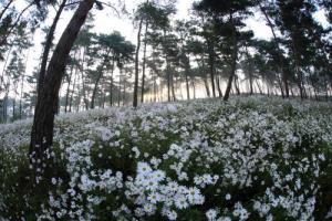 계절투어 하얀순백코스-구절초투어코스(10월 1주~3주),전라북도 정읍시