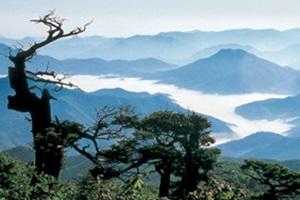 인간과 자연 중심의 산소도시 태백,국내여행,음식정보