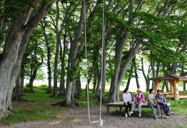 행정마을 사람들을 수호해주던 서어숲은 주민들의 소중한 마을숲으로 사랑받고 있다.