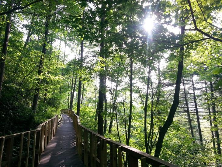아름드리 숲 속으로 걷기 좋은 탐방로가 조성돼 있는 횡성 숲체원