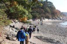 안산시, '전국 대부해솔길 걷기 축제' 9월 15일 개최, 국내여행, 여행정보