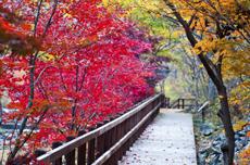 보령시, 제17회 성주산 단풍축제 및 단풍길 걷기대회 개최, 국내여행, 여행정보