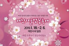뭐! 겨울에도 벚꽃이 핀다고? 제천시, 겨울 벚꽃축제 개최한다, 국내여행, 여행정보