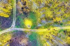 『고령 은행나무숲』  '가을 비대면관광지 100선'에 선정 영광, 국내여행, 여행정보