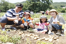 괴산 감물감자축제, 6월 18일부터 20일까지 개최, 국내여행, 여행정보