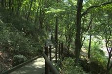 운일암반일암 숲길에서 안전하게 여름의 청량감을 느껴보세요, 국내여행, 여행정보