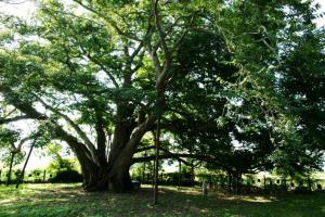 마을의 수백 년 역사를 간직하다, 강진의 나무들,전라남도 강진군