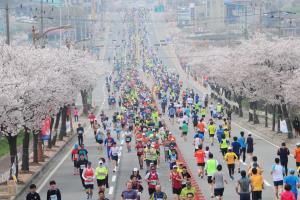 벚꽃이 휘날리는 낭만 레이스, 예산벚꽃마라톤대회,충청남도 예산군
