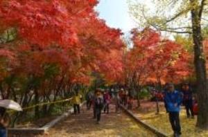 가을 문화축제의 끝판왕, 소요단풍문화제,국내여행,음식정보