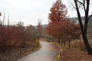 가을빛 가득! 만추의 여주 황학산수목원,경기도 여주시