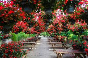 사계절 내내 아름다운 꽃밭, 아산세계꽃식물원,충청남도 아산시