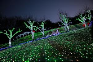 청도프로방스 별빛동화마을빛축제 속으로 들어가 보자,경상북도 청도군