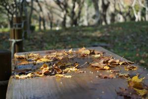 언제라도 부담 없이! 제주도 산책하기 좋은 곳, 한라수목원,제주특별자치도 제주시