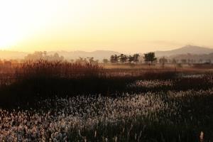 몸과 마음을 힐링할 수 있는 봄을 기다리며, 소래습지생태공원,인천광역시 남동구