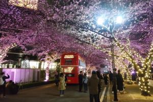 대구에도 봄이 왔어요! 대구 이월드 별빛벚꽃축제,대구광역시 달서구