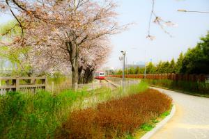 봄날의 벚꽃과 편한 휴식이 있는 나들이, 왕송호수공원 ,경기도 의왕시