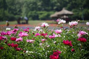 완연한 봄의 아름다움을 만끽하는, 인천대공원,인천광역시 남동구