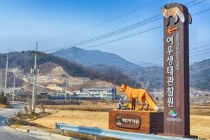 소백산 붉은 여우를 찾아 떠난 여우생태관찰원,경상북도 영주시