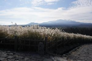 억새꽃 만발한 제주도 산굼부리의 가을 정취, 국내여행, 여행정보