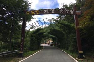 소나무와 계곡이 어우러진 합천 오도산 자연휴양림을 가다, 국내여행, 여행정보