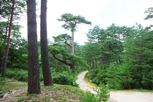문경 선유동천나들길 전국 최고의 숲길로 인정받아, 국내여행, 여행정보