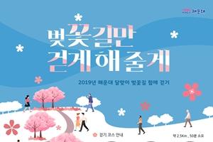 해운대 달맞이 벚꽃 길 걸으며 인생샷 '찰칵', 국내여행, 여행정보