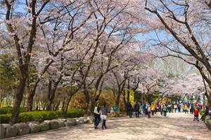 서울시, 봄꽃으로 물들다.'아름다운 봄꽃길 160선'소개, 국내여행, 여행정보