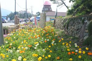 힐링섬 대도 '낙지와 꽃의 만남' 페스티벌
