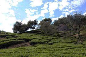 세계농업유산 하동 화개골의 천년차밭길 걸어요, 국내여행, 여행정보