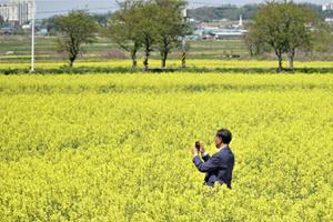 '월출산 아래 40만평의 유채꽃밭에서 펼쳐지는 향연', 국내여행, 여행정보