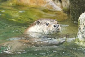 이번 주말, 행복한 수달보러 서울대공원 동물원 나들이 가볼까, 국내여행, 여행정보