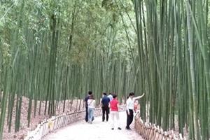 꼭 가볼 만 한 행복한 곳, 태화강 십리대숲과 은하수길, 국내여행, 여행정보