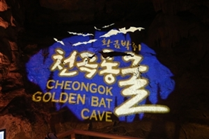 새롭게 단장된 '천곡황금박쥐동굴' ... 내·외국인 모두를 위한 관광지로 거듭나, 국내여행, 여행정보