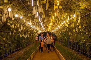 양주 '나리농원' 22일까지 야간 개장… 가을은 '천만송이 천일홍 축제'와 함께 하세요