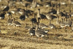 천수만 겨울철새들의 힘찬 날갯짓 시작!!, 국내여행, 여행정보