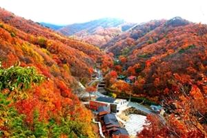 가을 무르익은 민주지산 자연휴양림에서 즐기는 '힐링여행', 국내여행, 여행정보